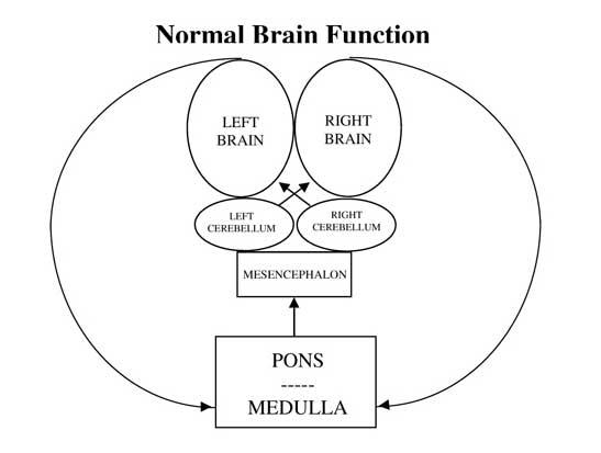 Brain Normal Function Normal Brain Function